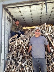 elk shed antler truck
