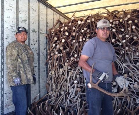 shed antler truck