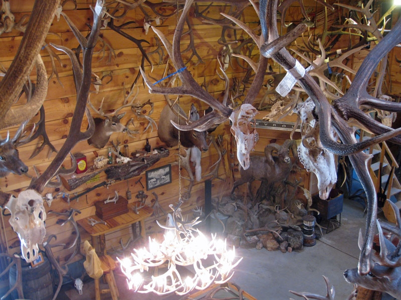 arizona shed antler collection barn