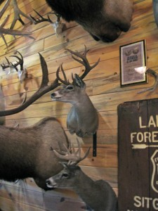 coues-bucks
