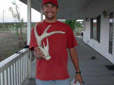 coues whitetail shed anlter