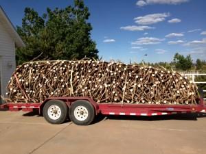elk shed antler trailer