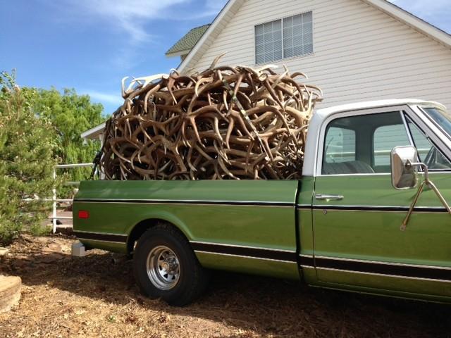 elk shed antlers on truck