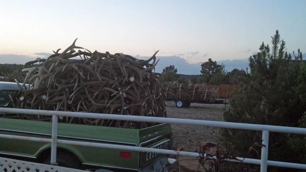 elk shed antler truckload