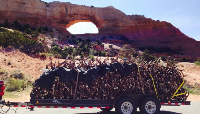 Elk antlers on their way up to Utah